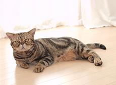 ペットの腰痛を防ぐ床
